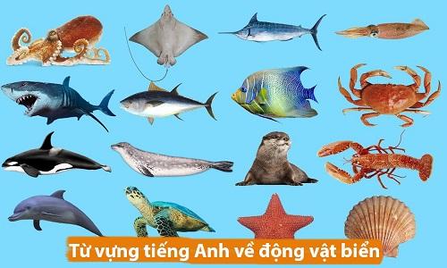 Từ vựng tiếng Anh về động vật biển
