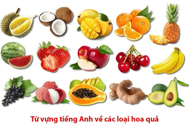 Từ vựng tiếng Anh về các loại hoa quả