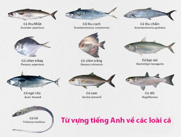Từ vựng tiếng Anh về các loài cá