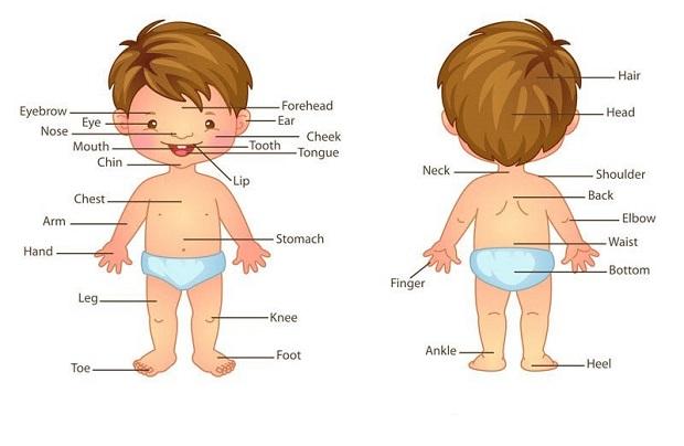 Học từ vựng tiếng Anh theo chủ đề bộ phận cơ thể cho trẻ